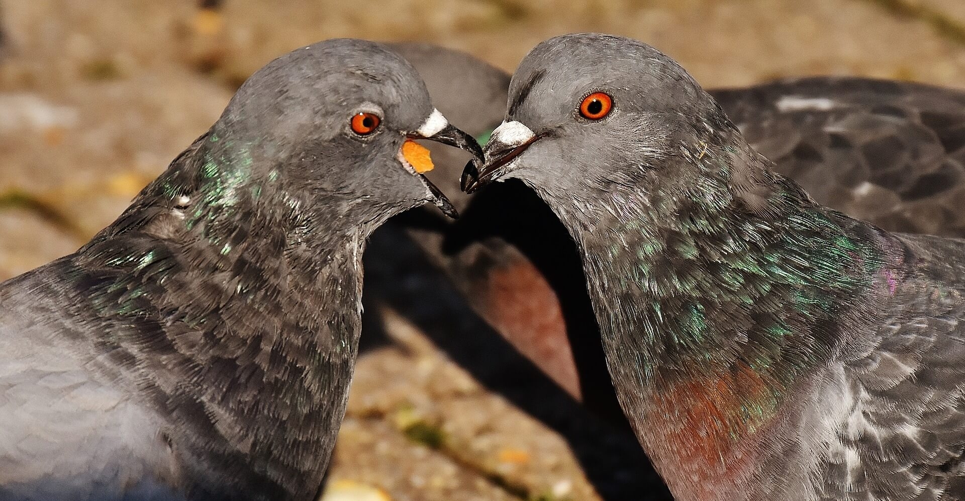 news_header_v1_city-pigeons-1697019_1920