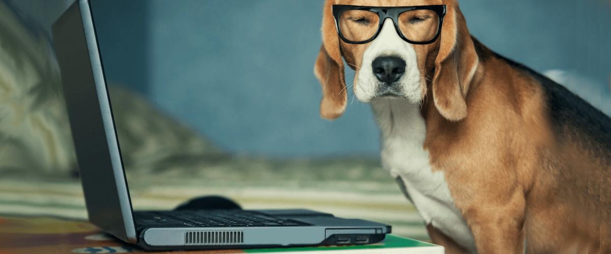 Digitization symbolized by a dog wearing glasses next to a laptop
