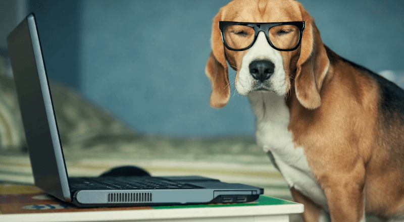Digitization symbolized by a dog wearing glasses next to a laptop