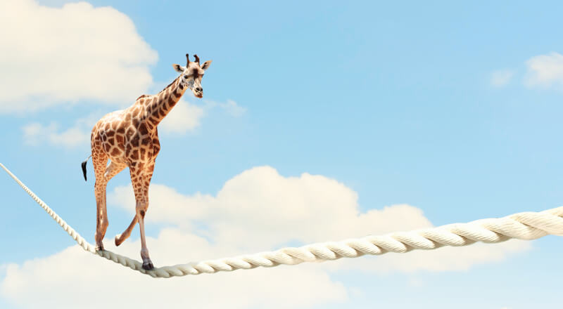 Giraffe walking towards you on a rope in the sky